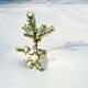 Egyedüllét Karácsonykor nyitókép